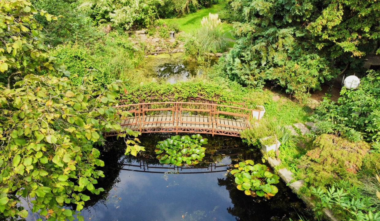 Seerosenteich mit Brücke